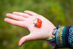 女性手用红色莓果 免版税库存照片