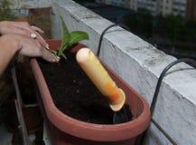 女性手种植在罐的花有在阳台的地球的 免版税库存图片
