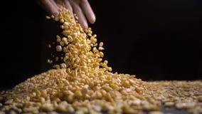 女性手藏品极少数干分裂豌豆,优质食物 影视素材