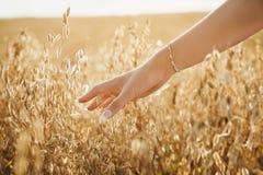女性手幻灯片投掷了燕麦的耳朵 图库摄影