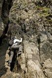 女性攀岩运动员 免版税库存图片