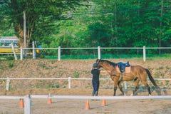 女性教练员训练温驯的幼小马在r 免版税库存图片