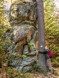 女性旅游huggin一棵树在森林里 免版税图库摄影