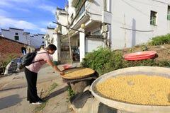 女性村民干燥农产品,多孔黏土rgb 库存照片