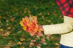 女性步行在秋天公园和收集brigth枫叶 免版税库存照片
