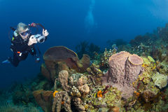 女性水下的摄影师在圣卢西亚 免版税库存照片