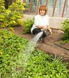 女性浇灌的庭院床 库存图片
