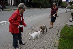 女性狗步行者 图库摄影