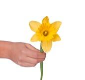 女性现有量查出的水仙黄色 免版税库存照片