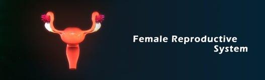 女性生殖系统 皇族释放例证