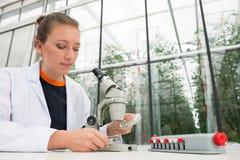 年轻女性研究员审查的叶子在实验室的显微镜下 库存照片