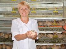 女性禽畜交配动物者拿着一个鹌鹑手中 免版税库存照片