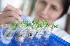 女性科学家或技术采摘从测试瓶子的水芹新芽 库存照片