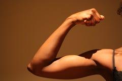 女性肌肉 库存照片