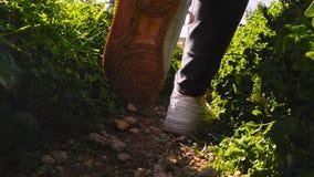 女性腿特写镜头,旅游走在沿一条狭窄的道路的运动鞋在森林女孩去朋友 影视素材