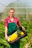 女性花匠在商品菜园或苗圃里 库存图片