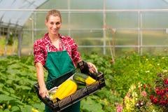 女性花匠在商品菜园或苗圃里 免版税图库摄影