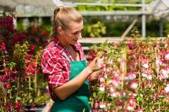 女性花匠在商品菜园或苗圃里 库存照片