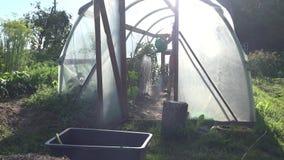 女性花匠简而言之与喷壶水厂的自温室在夏天庭院里 4K 影视素材