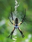 女性花园蜘蛛黄色 免版税库存照片