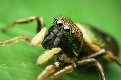 女性跳的蜘蛛 免版税库存照片