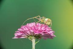 女性跳的蜘蛛 图库摄影