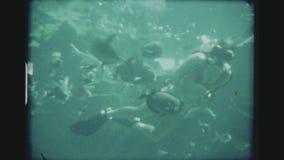 女性轻潜水员哺养的鱼水中 股票录像