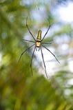 女性金黄网络蜘蛛(Nephila pilipes) 免版税库存照片