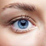 女性面孔特写镜头宏观画象  人的妇女蓝眼睛与 免版税库存照片