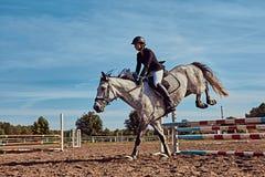 女性骑师在开放竞技场起斑纹跳过障碍的灰色马 图库摄影