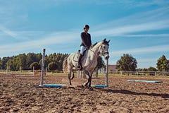 女性骑师在开放竞技场起斑纹跳过障碍的灰色马 免版税库存照片