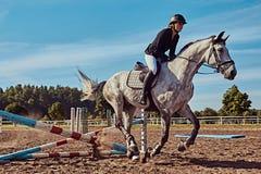 女性骑师在开放竞技场起斑纹跳过障碍的灰色马 库存图片