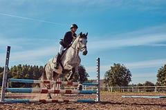 女性骑师在开放竞技场起斑纹跳过障碍的灰色马 免版税库存图片