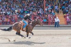 女牛仔和跑马对终点线在赛跑竞争的桶 免版税图库摄影