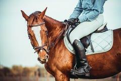 女牛仔和马 免版税库存照片