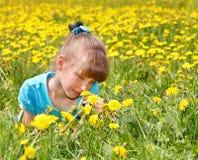 女花童草位于的一点 库存图片