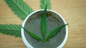 奶油色医药大麻大麻和叶子cannabidiol CBD收获了烘干软膏的生产的种子质量 股票录像