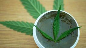 奶油色医药大麻大麻和叶子cannabidiol CBD收获了烘干软膏的生产的种子质量 股票视频