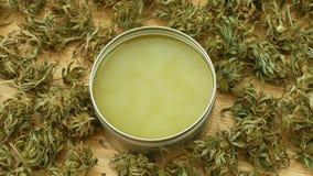 奶油色医药大麻大麻和cannabidiol CBD收获了烘干软膏的生产的种子质量,解除 股票视频