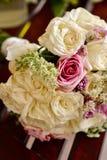 奶油色和桃红色玫瑰特写镜头  免版税图库摄影