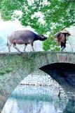 奶牛场农民wallking 免版税图库摄影