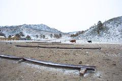 奶牛场冬天 图库摄影