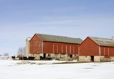 奶牛场冬天 库存照片