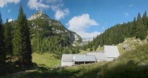 奶牛场在Krnsko jezero湖附近的Planina Duplje在朱利安阿尔卑斯山 免版税库存照片