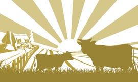 奶牛场场面 免版税库存图片