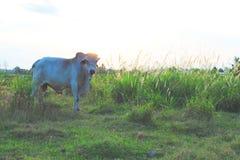奶牛场 任务文件 免版税图库摄影