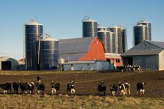 奶牛场 库存照片