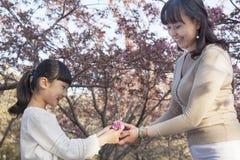 给她的女儿一朵樱花的微笑的母亲外面在公园春天,北京 库存图片