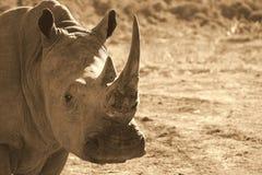她的犀牛的垫铁显示白色 免版税图库摄影