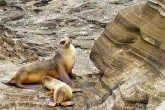她的狮子母亲小狗海运 免版税图库摄影